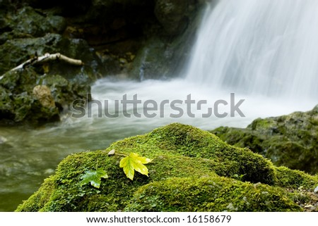 leaves in the edge of the river - stock photo
