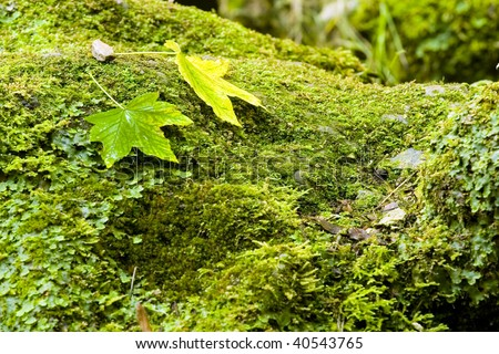 leaves in the stone - stock photo