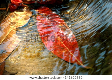 Leaves in water - stock photo