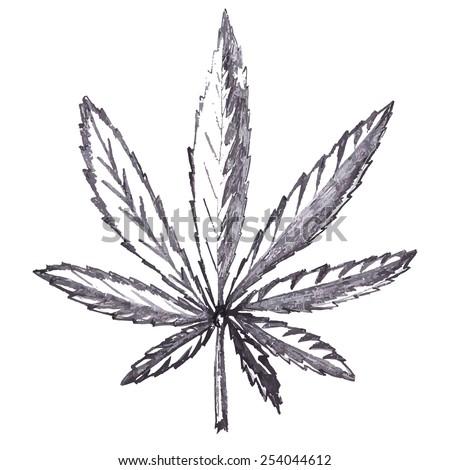 leaves marijuana - stock photo