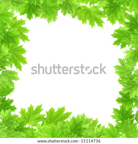 Leaves of a maple - isolated over white - stock photo