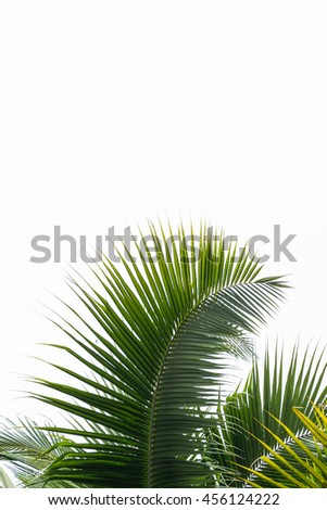 Leaves of coconut tree isolated on white background, clipping path included - stock photo