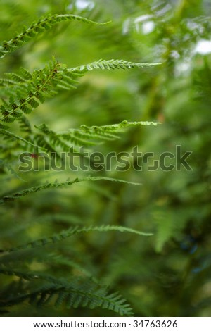 Leaves of fern in green background - stock photo