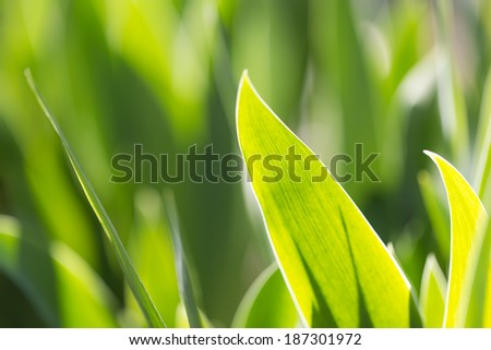leaves of grass in nature. Macro