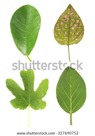 Leaves of green house plants, isolated on white