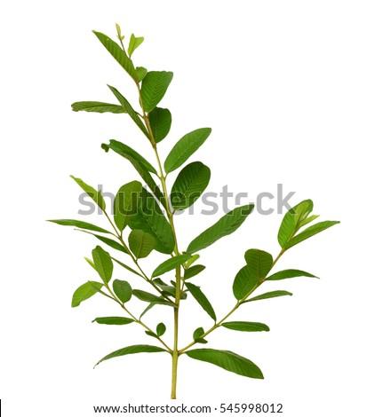 Purple Sage: Instrucciones para la plantación y el cuidado   DoItYourself.com