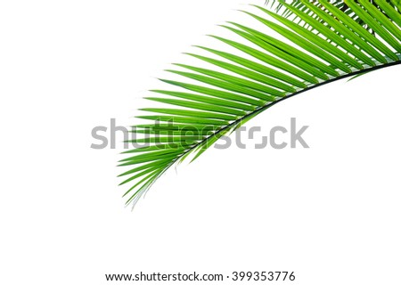 Leaves of palm tree on white background - stock photo