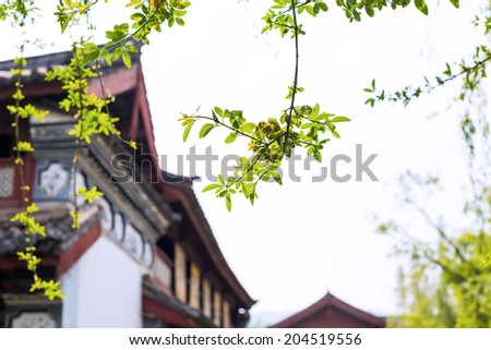 Leaves of spring, located in Yunnan Nationalities Village, Kunming City, Yunnan Province, China. - stock photo