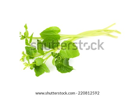 Leaves of wasabi - stock photo