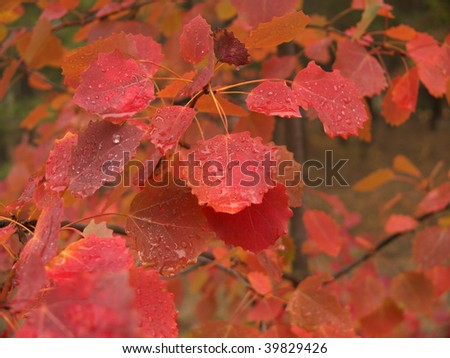 leaves on a branch with dew - stock photo