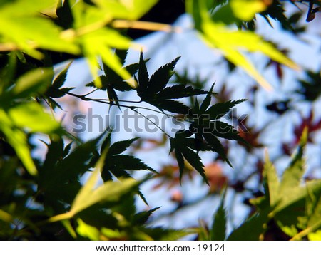 Leaves on a tree. - stock photo