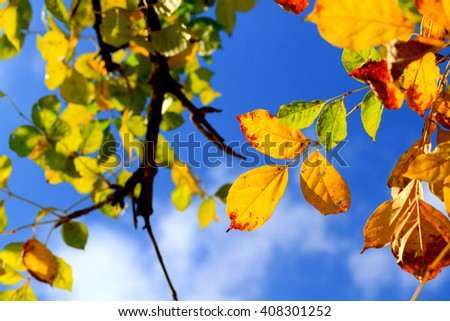 leaves on a tree against the blue sky - stock photo