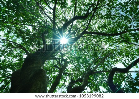 https://thumb9.shutterstock.com/display_pic_with_logo/167494286/1053199082/stock-photo-leaves-on-a-tree-in-the-park-with-the-sun-1053199082.jpg