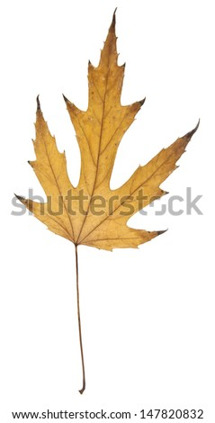 leaves on a white background - stock photo