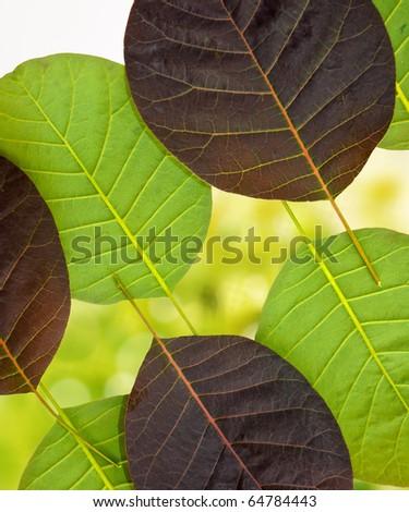 leaves on beautiful background - stock photo