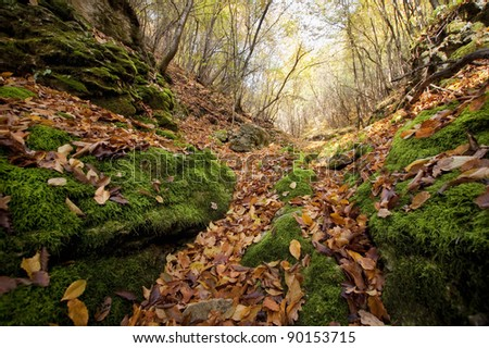 leaves on forest ground in autumn - stock photo