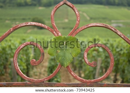 Leaves on gate, with vineyard, Bourgogne. France