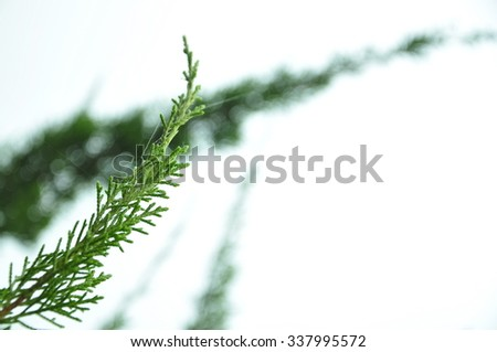 Leaves on white background in the national park