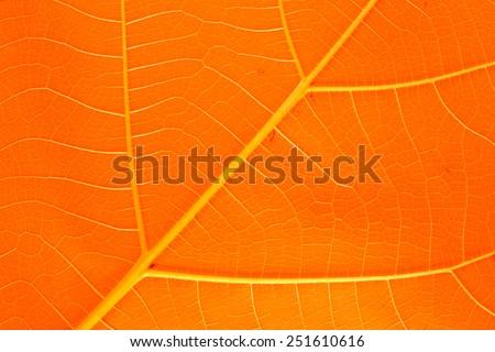 leaves orange leaf texture background - stock photo