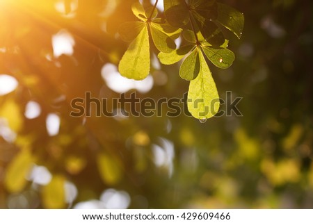 Leaves, sunlight, water droplets