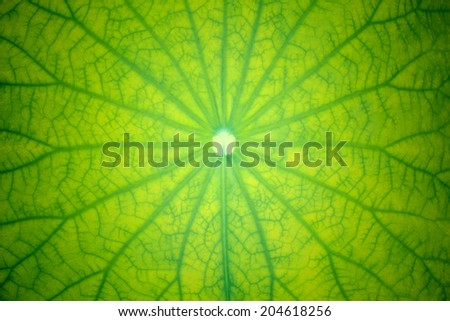 leaves textures - stock photo