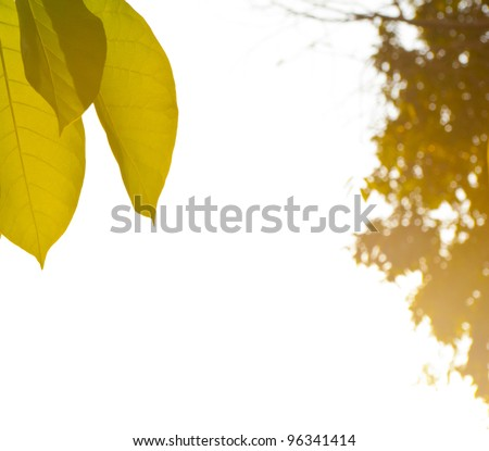 Leaves under the sun sets. - stock photo