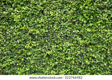 leaves wall texture background