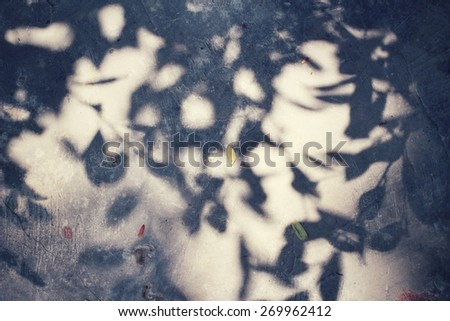 Leaves with shadow - stock photo