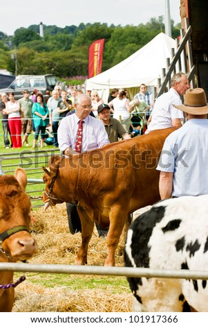 LEEK, ENGLAND - JULY 30, Farmers attending distressed cattle at  Britannia Leek & District Show on July 30 2011 in Leek, England, UK. The Britannia Leek & District Show is an annual agricultural event