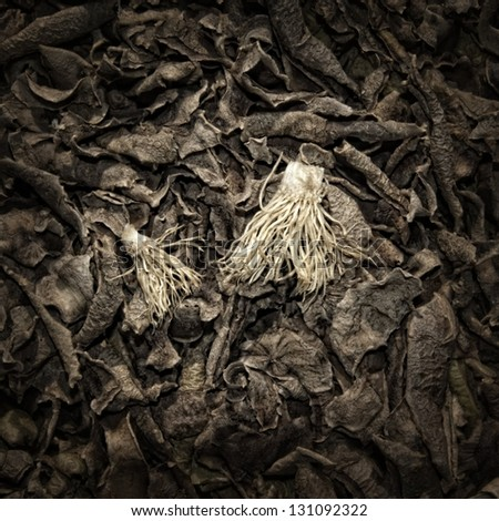 Leek rhizomes and dry potato peelings on a Compost Heap/Artistically alienated to create a grungy somber atmosphere. - stock photo