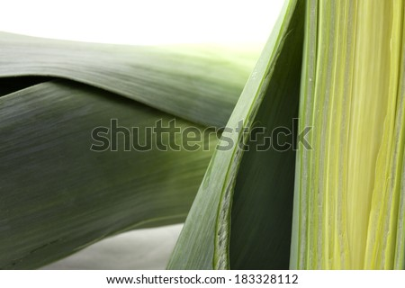 Leeks in section on a white background - stock photo