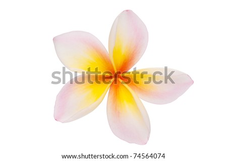 Leelawadee on white with clipping paths - stock photo
