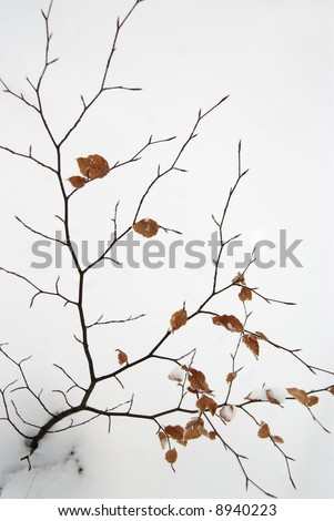 Left leave on a bush in winter - stock photo