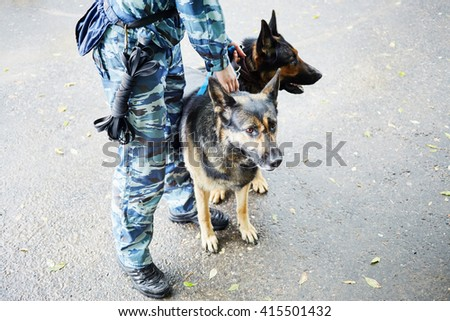 Legs of policeman in camouflage with two shepherds outdoor. - stock photo