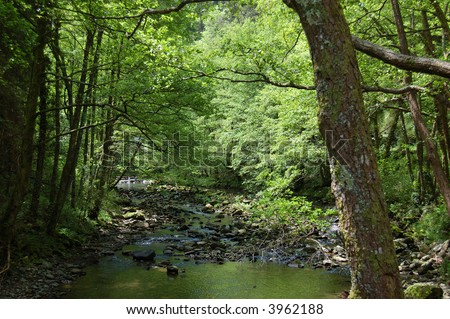 Leiza river and trees with vegetation. Leizaran Valley, Navarra, Spain