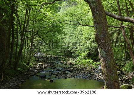 Leiza river and trees with vegetation. Leizaran Valley, Navarra, Spain - stock photo