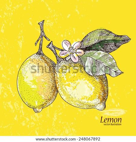 Lemon citrus . - stock photo