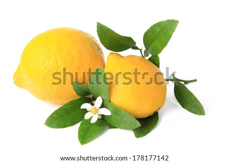 Lemon (Citrus x limon) - isolated ripe fruit against white background with a little twig and blossom - stock photo