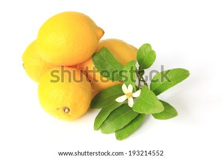 Lemon (Citrus x limon) - ripe fruits isolated against white background with a litle twig with a blossom - stock photo