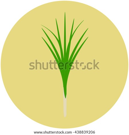 Lemon grass isolated on old yellow circle background