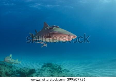 Lemon over coral reef , Bahamas - stock photo