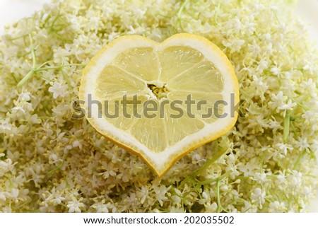 lemon shaped into heart on elderberry flower - stock photo