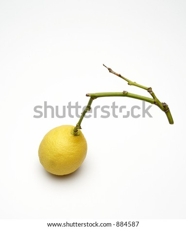 lemon with green branch