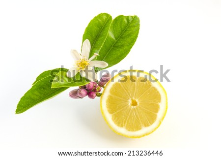 Lemon with leaves and flower on a white background - stock photo