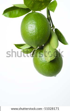 Lemons on branch on white background