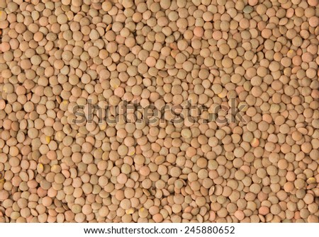Lentil Background - stock photo