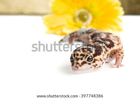 Leopard Gecko with a flower - stock photo