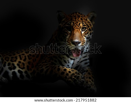 leopard in the dark night - stock photo