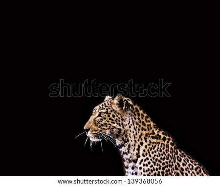 Leopard on black background - stock photo