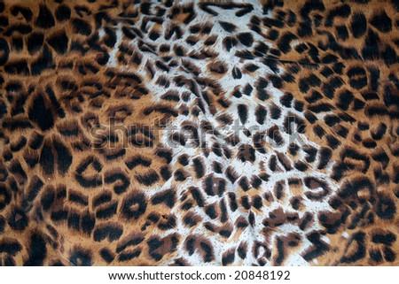 leopard pattern texture - stock photo